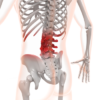 腰痛マットレス緩和